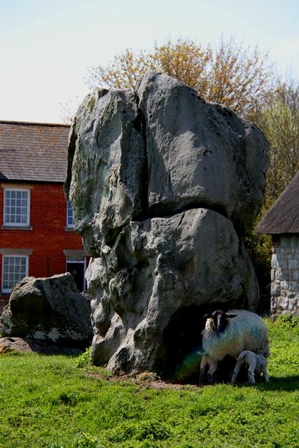Avebury sheep 1